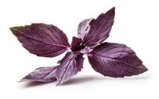Красный базилик — выращивание и пищевая ценность