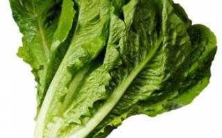 Салат романо — свойства, посадка и уход