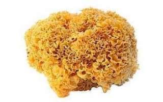 Грибная капуста (спарассис курчавый) — свойства, польза и вред