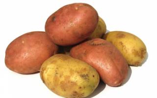 Молодой картофель — характеристика овоща с фото, его калорийность