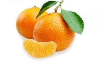 Мандарин — описание свойств плодов и кожуры этого фрукта