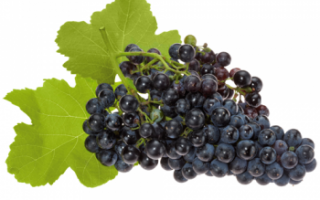 Виноград Каберне Совиньон — калорийность, польза и вред