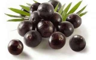 Ягоды асаи — описание их свойств пользы и вреда