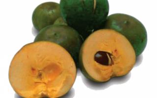 Лукума — описание фрукта и его свойств с фото