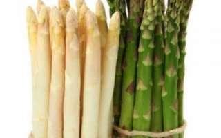 Характеристика полезных свойств спаржи с фото, ее калорийность, а также рецепты приготовления этого продукта