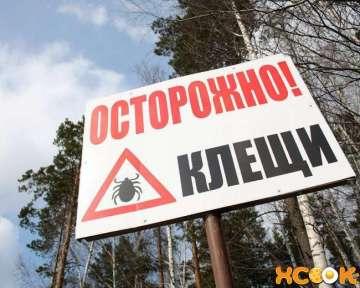Лесные клещи — виды, их опасность и средства защиты