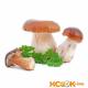 Моховик — описание, как выглядит гриб с фото; польза, вред, противопоказания; использование в кулинарии