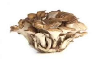 Майтаке – характеристика полезных свойств, вреда, противопоказаний; применение для лечения и в кулинарии; фото гриба и отзывы о нем