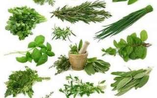 Список пряных трав с фото, описание, как вырастить и заготовить
