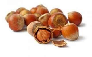 Фундук – польза и вред, выращивание, посадка и уход