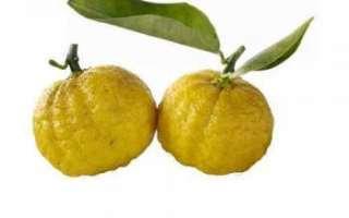 Японский лимон (Юзу) – состав и описание продукта с фото; польза и вред; использование фрукта в кулинарии и косметологии