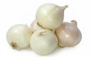 Репчатый лук белый — характеристика его пользы, а также фото овоща