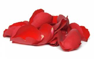 Лепестки роз – описание с фото цветка; его лечебные свойства и противопоказания; польза и вред; применение в кулинарии и лечении (с рецептами)