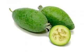 Фейхоа — польза и вред этого экзотического фрукта
