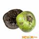 Сапота (чёрное яблоко) — характеристика этого растения и его плодов с фото