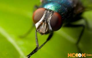 Как избавиться от мух дома на кухне, чердаке и в цветочных горшках? Чем можно вывести мух с грядок на даче?