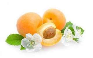 Абрикос жердела — описание его свойств (польза и вред), характеристика состава (витамины, минералы), использование в кулинарии и лечении, фото фрукта