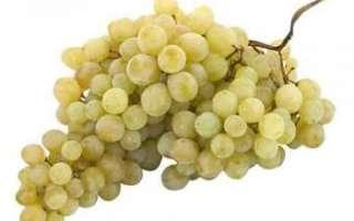 Виноград кишмиш — лучшие сорта, полезные свойства и вред