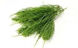 Хвощ полевой – описание с фото растения; польза и вред; применение в лечении и кулинарии