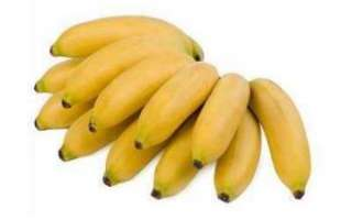 Бананы мини — польза, вред и противопоказания; описание с фото разницы с обычными бананами; использование в кулинарии