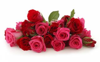 Цветок роза – описание с фото растения; его посадка и выращивание; полезные свойства; использование в кулинарии и для лечения; рецепты из цветов роз