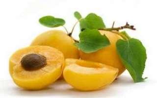 Абрикосы — полезные свойства, виды и сорта