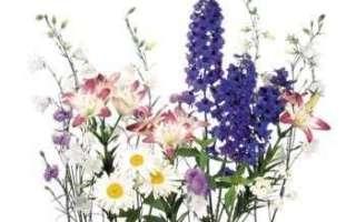 Съедобные цветы – какие цветки съедобны (с фото); их виды и свойства; использование в кулинарии и лечении