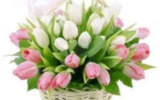 Цветы тюльпаны — выращивание, польза и вред