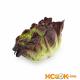 Салат оаклиф (дубовый лист) — калорийность, польза и вред