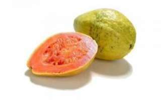 Гуава — описание с фото полезных свойств, вреда и противопоказаний экзотического фрукта; его использование в лечении и кулинарии