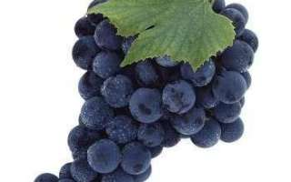 Черный виноград — описание сорта с фото