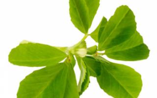 Пажитник сенной (фенугрек) — полезные свойства, выращивание и уход