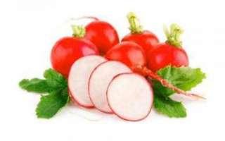 Красная редька – характеристика полезных свойств и вреда; противопоказания к употреблению; описание использования в кулинарии; фото овоща