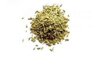 Семена фенхеля — полезные свойства и противопоказания