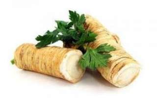 Полезные свойства хрена и его вред, фото продукта и рецепты его приготовления