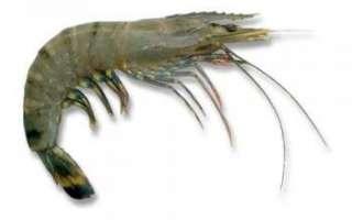 Описание тигровых креветок и их видов, полезные качества продукта и его состав; как приготовить тигровые креветки и рецепты с этим морепродуктом