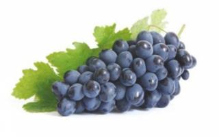 Виноград Изабелла — описание сорта, полезные свойства и вред