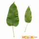 Смилакс (сассапариль) – описание с фото травы; лечебные свойства корня; использование смилакса в кулинарии и народной медицине