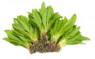 Полезные свойства черемши с фото, лечение с ее помощью, а также приготовление этого растения
