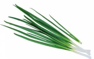 Лук-батун – описание с фото растения; его выращивание и уход; полезные свойства (польза и вред) и применение; рецепты блюд