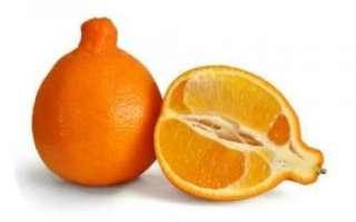 Танжело — подробная характеристика свойств фрукта с фото