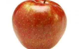 Яблоки Медуница — описание сорта, фото плодов, отзывы о них