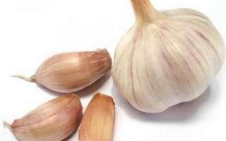 Чеснок — лечебные полезные и вредные свойства