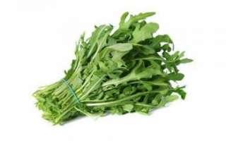 Рукола — польза и вред, прочие свойства; ее выращивание в домашних условиях и на огороде