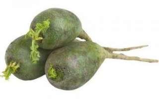 Какие витамины содержаться в зеленой редьке, в чем заключается их польза и вред?