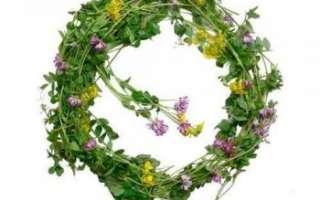 Растение чина — свойства, сбор и хранение