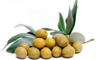 Оливки — описание пользы и вреда овоща с фото, его калорийность