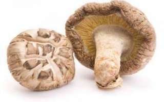 Шиитаке — лечение при помощи этих древесных грибов, а также отзывы о них