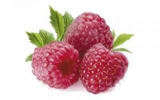 Малина — описание полезных свойств ягод и листьев растения, а также малинового сока