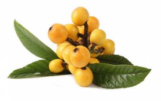 Мушмула японская (локва) — описание полезных свойств этого фрукта, а также его фото